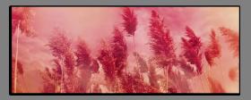 Obrazy detaily přírody 2548