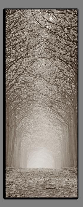 Obrazy stromy 2550