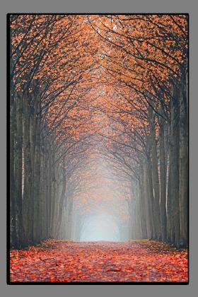 Obrazy stromy 2559
