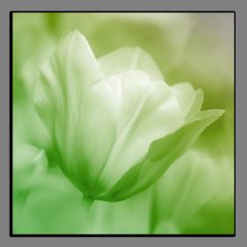 Obrazy tulipány 2560