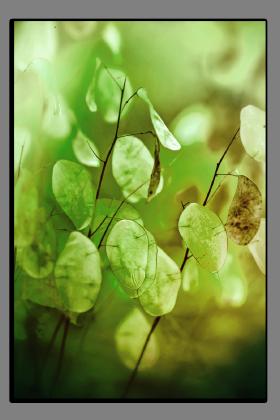 Obrazy detaily přírody 2564