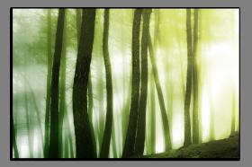 Obrazy stromy 2570