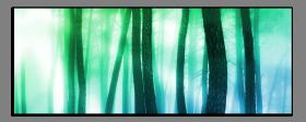 Obrazy stromy 2572