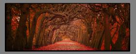 Obrazy stromy 2573
