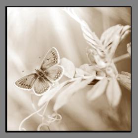 Obrazy harmonie květů 2583