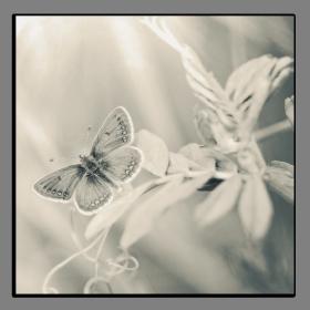 Obrazy harmonie květů 2586