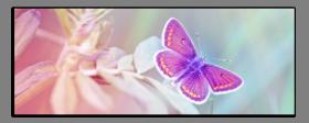 Obrazy harmonie květů 2589