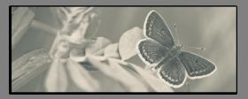 Obrazy harmonie květů 2590