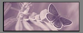 Obrazy harmonie květů 2591