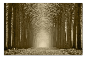 Obrazy stromy 2592