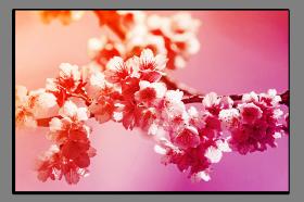 Obrazy květy 2594