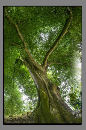 Obrazy stromy 2595