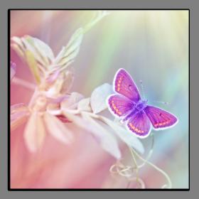 Obrazy harmonie květů 2596