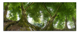 Obrazy stromy 2598