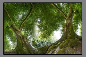 Obrazy stromy 2601