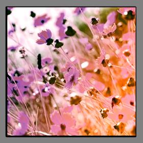 Obrazy různý květy 2603