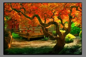 Obrazy stromy 2604