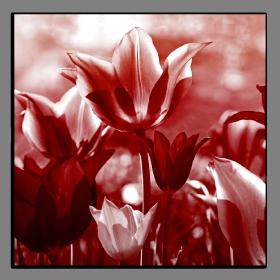 Obrazy tulipány 2605