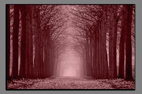 Obrazy stromy 2609