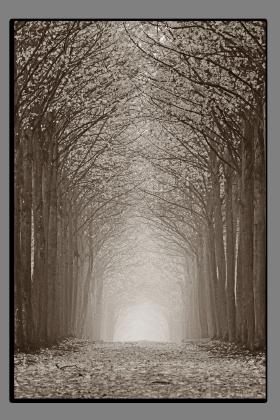 Obrazy stromy 2616