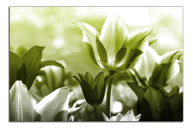 Obrazy tulipány 2622