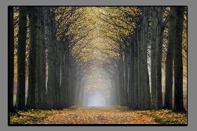 Obrazy stromy 2623
