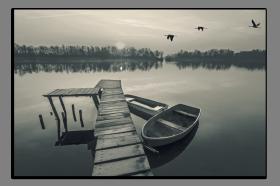 Obrazy čistě černobílý 2624