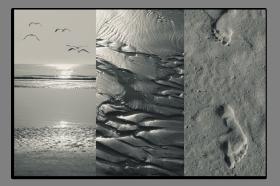 Obrazy čistě černobílý 2632