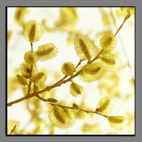 Obrazy detaily přírody 2659