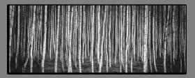 Obrazy stromy 2712