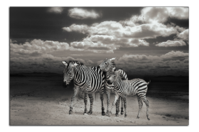 Obrazy zvířata 2729