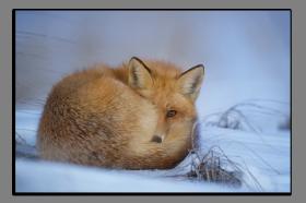 Obrazy zvířata 2730