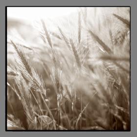 Obrazy detaily přírody 2731