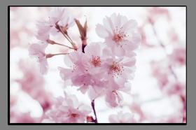 Obrazy různý květy 2733