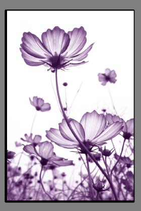 Obrazy různý květy 2758