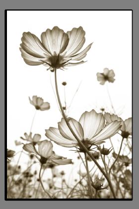 Obrazy různý květy 2759