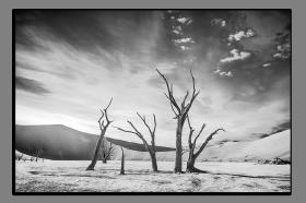 Obrazy stromy 2767