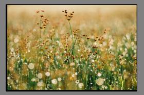 Obrazy detaily přírody 2768