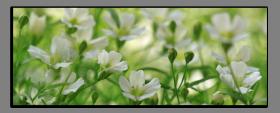 Obrazy různý květy 2769