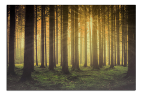 Obrazy stromy 2770