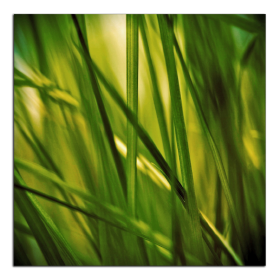 Obrazy detaily přírody 2776
