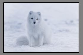 Obrazy zvířata 2782