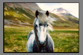 Obrazy zvířata 2783