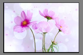 Obrazy různý květy 2784