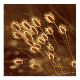 Obrazy detaily přírody 2787