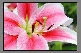 Obrazy různý květy 2789