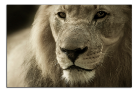 Obrazy zvířata 2790