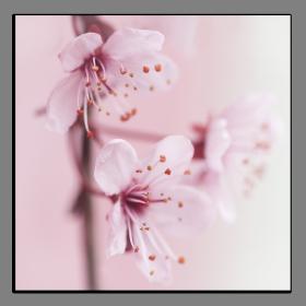 Obrazy různý květy 2812