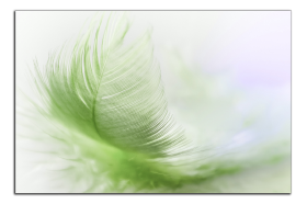 Obrazy detaily přírody 2813