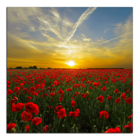 Obrazy západ slunce 2824
